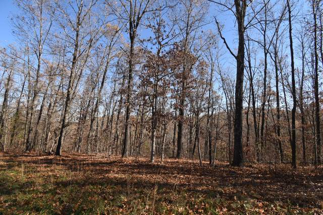 Lot 72 Lost In Woods Lane, Cape Fair, MO 65624 (MLS #60168843) :: Team Real Estate - Springfield