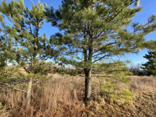 000-Lot 5 Tiki Trail, Gainesville, MO 65655 (MLS #60182414) :: Clay & Clay Real Estate Team
