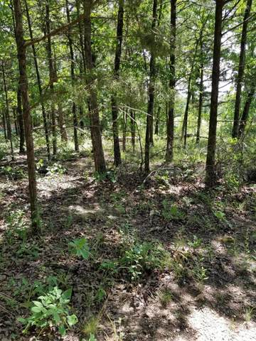 599 Lake Point Road, Kissee Mills, MO 65680 (MLS #60184437) :: Sue Carter Real Estate Group