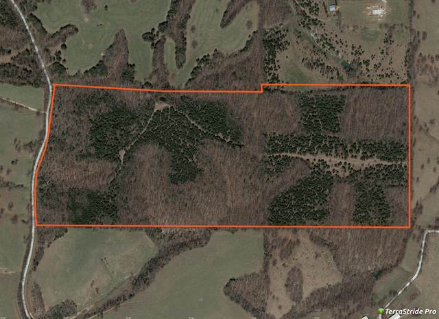 000 Dogwood Spring Road, Galena, MO 65656 (MLS #60190414) :: Tucker Real Estate Group   EXP Realty