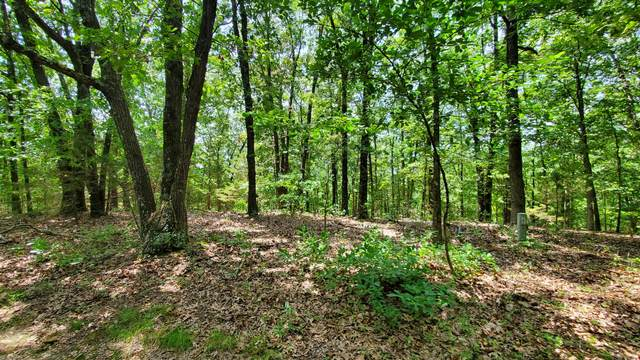 000 Ance Acres Lane, Reeds Spring, MO 65737 (MLS #60196306) :: The Real Estate Riders