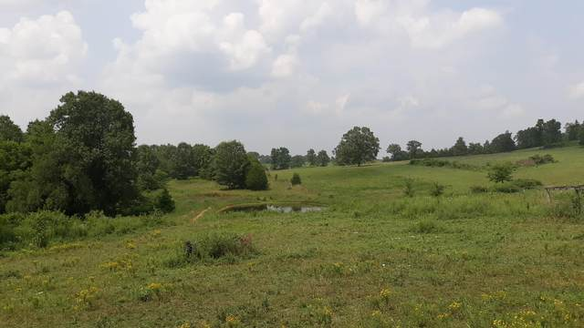 473 Us Highway 160, Theodosia, MO 65761 (MLS #60197102) :: Sue Carter Real Estate Group