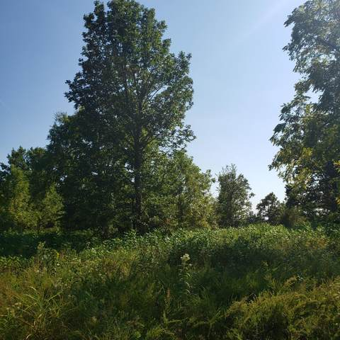 000 Schodack, Lampe, MO 65681 (MLS #60200486) :: Lakeland Realty, Inc.