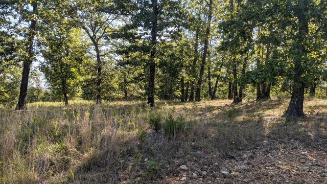 000 Long View Point, Forsyth, MO 65653 (MLS #60200884) :: Team Real Estate - Springfield