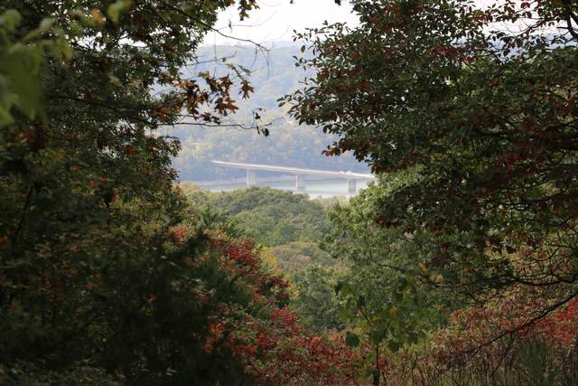 1253 Mule Barn Drive, Cape Fair, MO 65624 (MLS #60201659) :: Sue Carter Real Estate Group