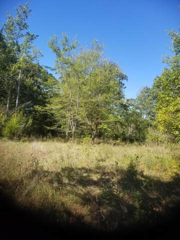 2952 W State Hwy 76, Galena, MO 65656 (MLS #60201712) :: Lakeland Realty, Inc.