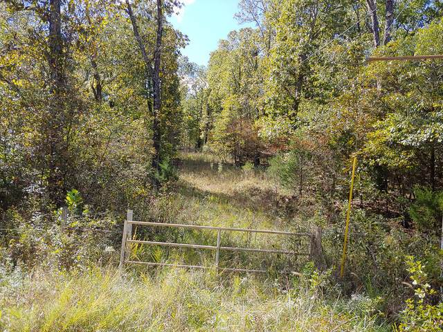 000 County Road 803A, Gainesville, MO 65655 (MLS #60203154) :: Clay & Clay Real Estate Team