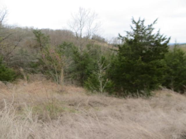 Lot 13 Hummingbird Hills Lane, Branson, MO 65616 (MLS #60072361) :: Team Real Estate - Springfield