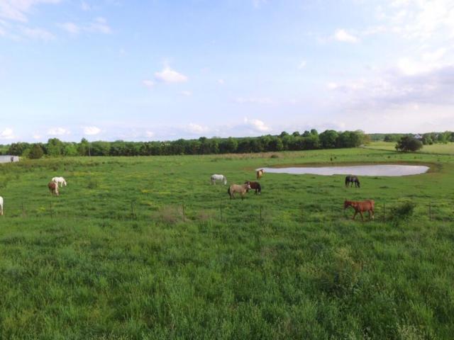 7100 E Farm Road 164, Rogersville, MO 65742 (MLS #60108150) :: Greater Springfield, REALTORS
