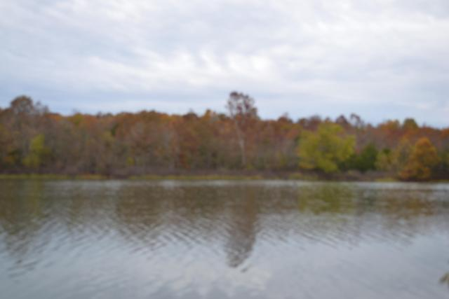 Tbd County Road 9301, West Plains, MO 65775 (MLS #60123172) :: Team Real Estate - Springfield