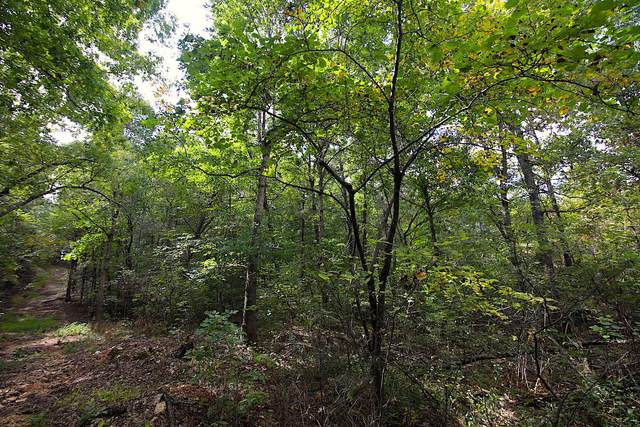 000 County Rd 359, Thayer, MO 65791 (MLS #60176341) :: United Country Real Estate