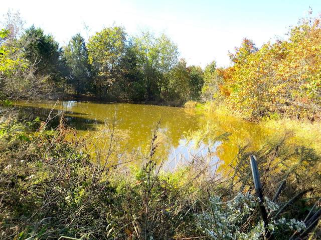 000 Ct Rd 220, Thayer, MO 65791 (MLS #60176504) :: Clay & Clay Real Estate Team