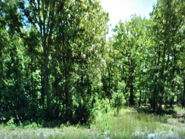 1974 State Hwy Dd, Bruner, MO 65620 (MLS #60203454) :: Clay & Clay Real Estate Team