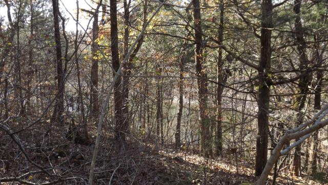Tbd Private Road 1216, Shell Knob, MO 65747 (MLS #60123640) :: Sue Carter Real Estate Group