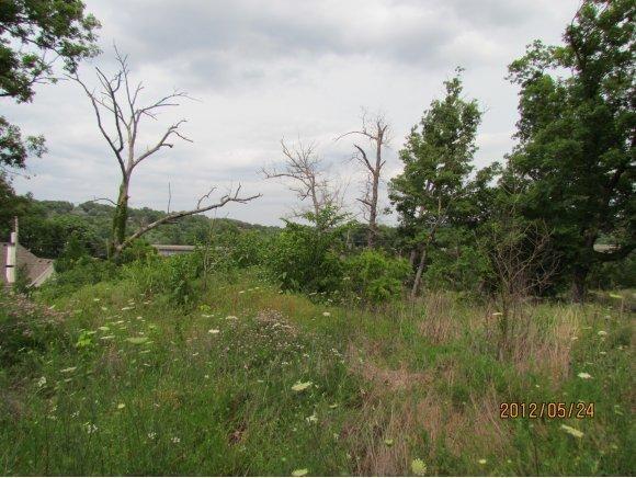 334 Stratford, Hollister, MO 65672 (MLS #60022553) :: Greater Springfield, REALTORS