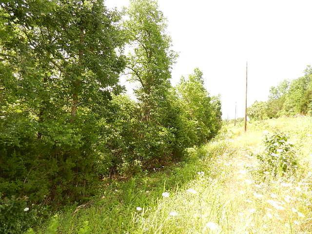 Lots 19-24 White Rock Bluff, Branson West, MO 65737 (MLS #60055354) :: Good Life Realty of Missouri