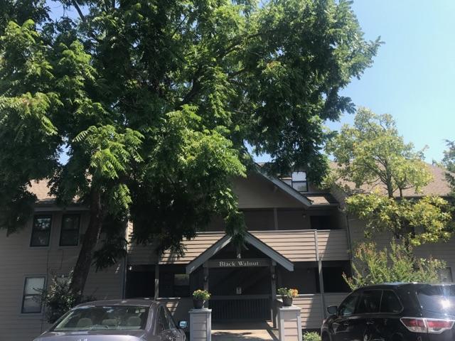 129 Treehouse Lane, Branson, MO 65616 (MLS #60085114) :: Select Homes