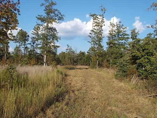 Tbd State Highway 99, Birch Tree, MO 65438 (MLS #60090871) :: Select Homes
