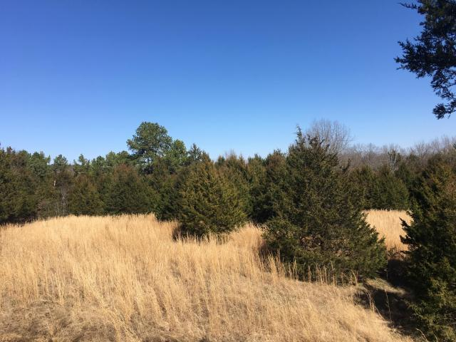 0 Whispering Oaks, Branson, MO 65616 (MLS #60099274) :: Good Life Realty of Missouri