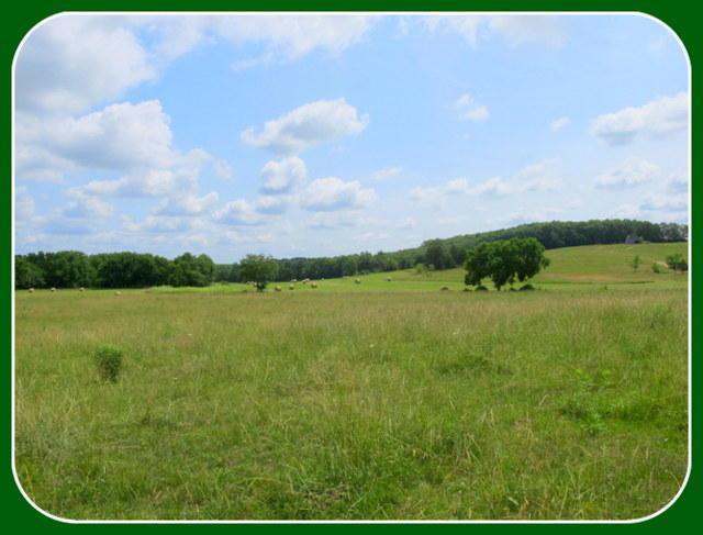Tbd Red Barn Road, Grovespring, MO 65662 (MLS #60111359) :: Sue Carter Real Estate Group