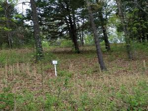 Lot 12 Mule Barn Drive, Cape Fair, MO 65624 (MLS #60117041) :: Team Real Estate - Springfield