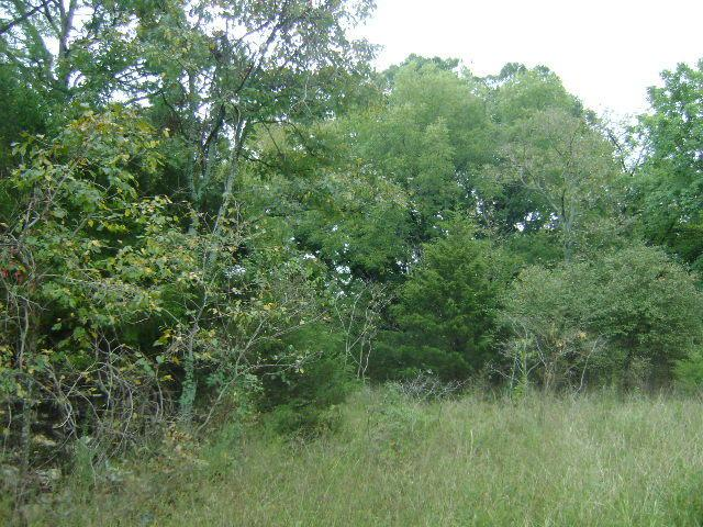 Lot 319 Elm Street, Shell Knob, MO 65747 (MLS #60119841) :: Massengale Group