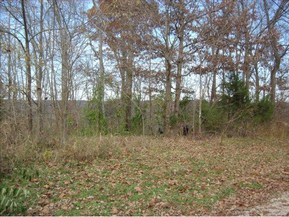 Lot 20 Rabbit Run, Cape Fair, MO 65624 (MLS #60122695) :: Team Real Estate - Springfield