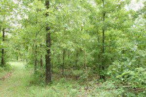 000 Private Road 5212, West Plains, MO 65775 (MLS #60123057) :: Team Real Estate - Springfield