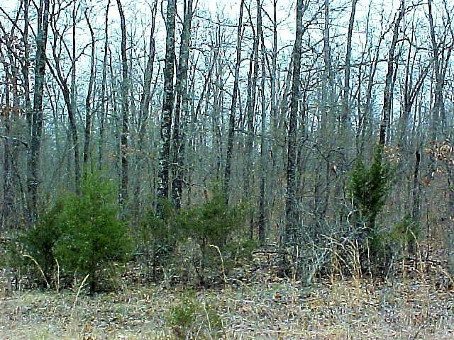 7833 Handcove Road Lot 8, Mountain Home, AR 72653 (MLS #60129925) :: Weichert, REALTORS - Good Life
