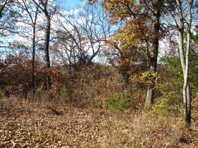 Tbd Lot437 Cedar Lane, Shell Knob, MO 65747 (MLS #60131251) :: Massengale Group