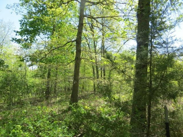Tbd Trace Creek Road, Mammoth Spring, AR 72554 (MLS #60133341) :: Weichert, REALTORS - Good Life