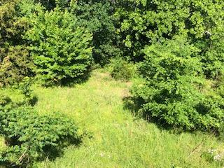 Lot 31 Cedar Lane, Rockaway Beach, MO 65740 (MLS #60136973) :: Sue Carter Real Estate Group