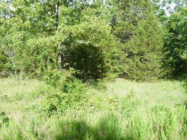 26 Limestone Drive, Branson, MO 65616 (MLS #60139109) :: Sue Carter Real Estate Group