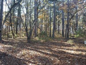 Tbd Forest Service Road 749, Dora, MO 65637 (MLS #60139300) :: Sue Carter Real Estate Group