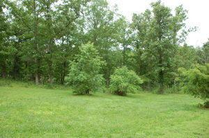 Tbd State Route Bb, West Plains, MO 65775 (MLS #60139672) :: Weichert, REALTORS - Good Life
