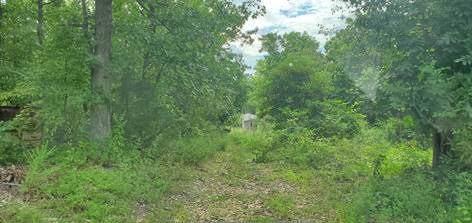 251 Wallace Lane, Pineville, MO 64856 (MLS #60151592) :: Sue Carter Real Estate Group