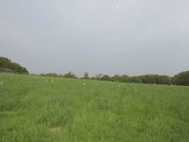 Tbd N County Road 343, West Plains, MO 65775 (MLS #60156246) :: Team Real Estate - Springfield