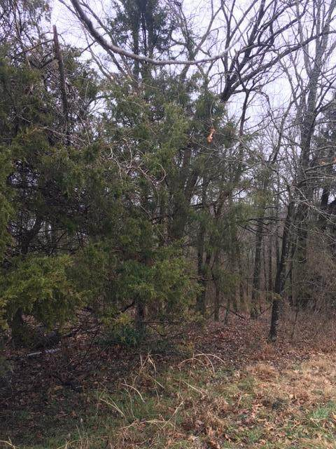 Tbd State Hwy Dd, Branson West, MO 65737 (MLS #60182145) :: United Country Real Estate