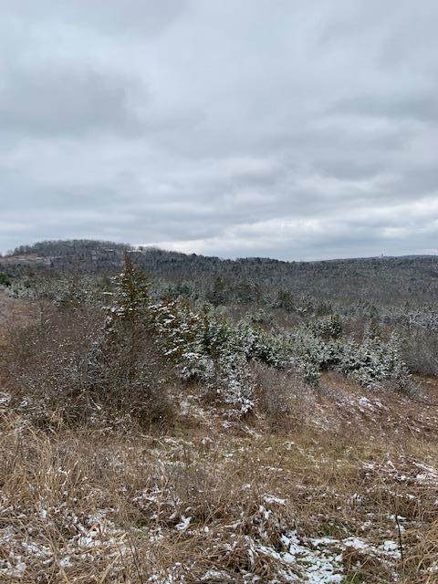Lot 4 Holiday Haven, Hollister, MO 65672 (MLS #60182400) :: Clay & Clay Real Estate Team
