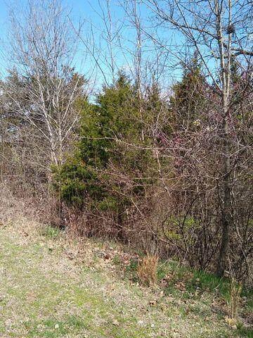 120 Cottonwood Circle, Branson, MO 65616 (MLS #60189505) :: Lakeland Realty, Inc.