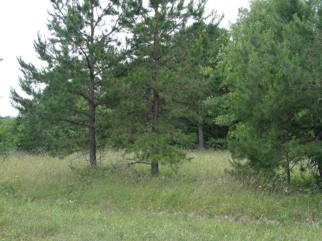 000 Chisolm Trail, Raymondville, MO 65555 (MLS #60196723) :: United Country Real Estate