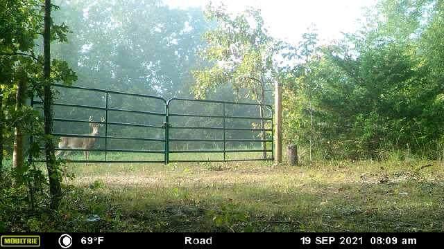 00000 Tract #2 Copperstone Rd, Camdenton, MO 65020 (MLS #60201351) :: Sue Carter Real Estate Group