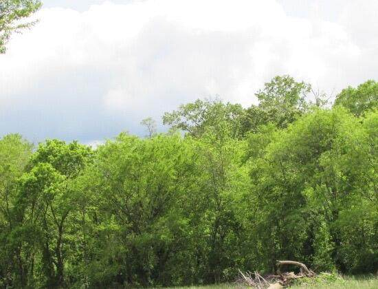 Tbd Lots 8 & 21 Tecumseh Trace, Tecumseh, MO 65760 (MLS #60203397) :: Clay & Clay Real Estate Team