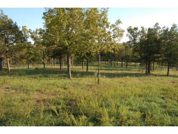 Lot 22 Cedar Falls Road, Shell Knob, MO 65747 (MLS #30355229) :: United Country Real Estate