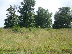 Tbd Lot 16 Private Road 7201, West Plains, MO 65775 (MLS #60007324) :: Greater Springfield, REALTORS