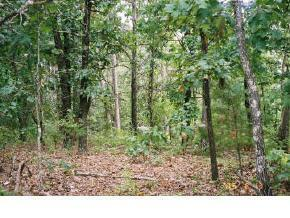 000 E State Highway 86 Lot 6, Blue Eye, MO 65611 (MLS #60009762) :: Sue Carter Real Estate Group