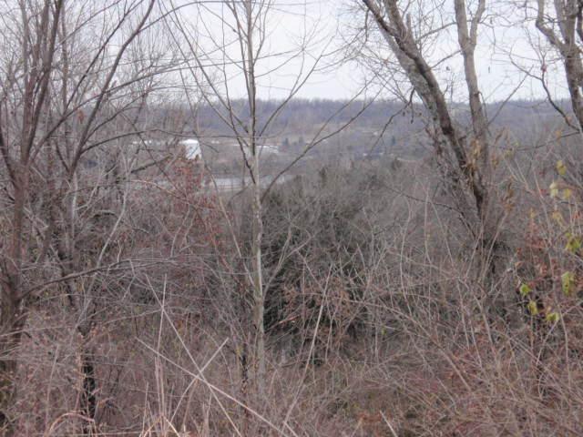 1540 E River Oaks Lane, Springfield, MO 65804 (MLS #60018736) :: Massengale Group