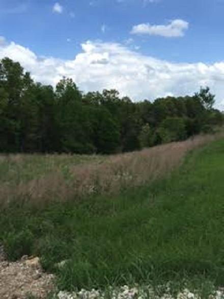 15300-5599 Us Hwy 54, Mack's Creek, MO 65786 (MLS #60049608) :: Good Life Realty of Missouri