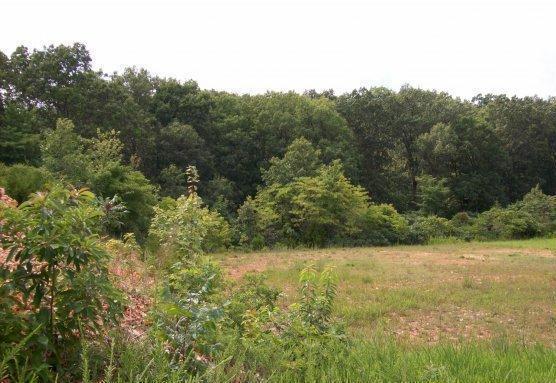 76 & Y Hwy Turkey Ridge Commons, Reeds Spring, MO 65737 (MLS #60113655) :: Sue Carter Real Estate Group
