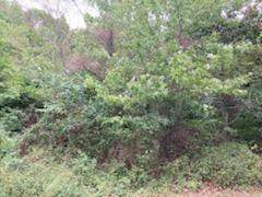 000 Highway D, Lot 6, Webb City, MO 64870 (MLS #60201228) :: Sue Carter Real Estate Group